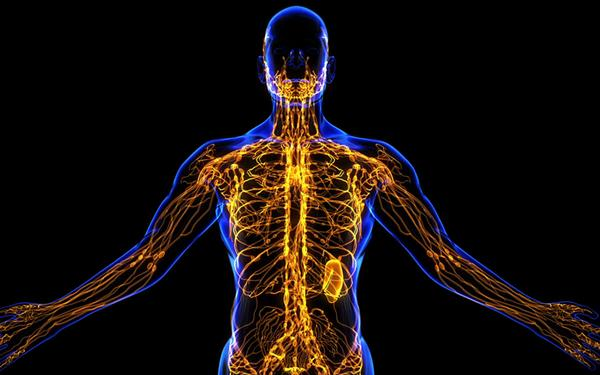Reasons Why The Lymphatic System Is SO Important